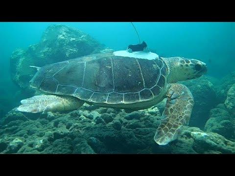 Ινδικός Ωκεανός: Χελώνες βοηθούν στην πρόγνωση κυκλώνων…