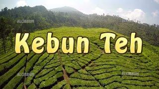 Kebun Teh Indonesia