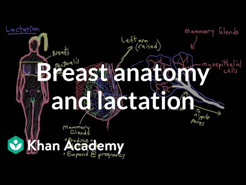 Breast Anatomy And Lactation | Reproductive System Physiology | Nclex-rn | Khan Academy