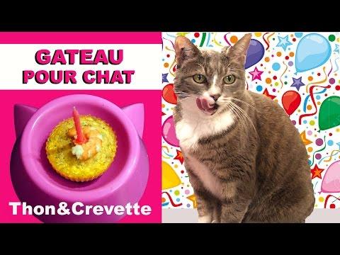G teau pour chat au thon et crevette virginie fait sa cuisine 44 free video and related - Virgine fait sa cuisine ...