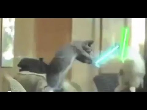 Funny Animals,Total Video Funny Animals