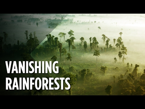 What will our earth look like when the rain forests disappear?