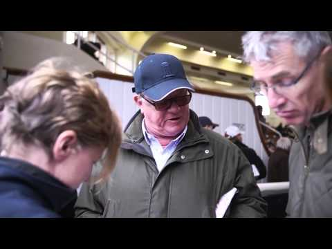 Tattersalls October Yearlings Sale Book 2 Day 2 2015 Video Review