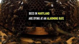 Did you know? In 2016, Maryland beekeepers lost 56% of their hives. Reporters explore what's killing the bees in an immersive 360 video, coming soon.
