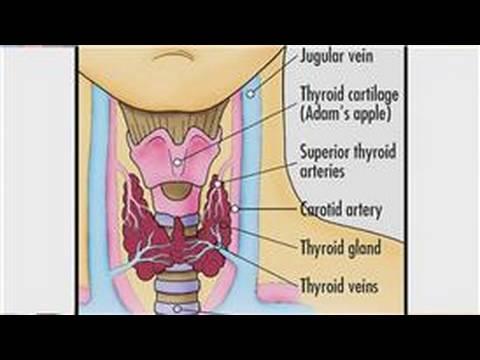 Thyroid Disease : Medical Information on the Thyroid