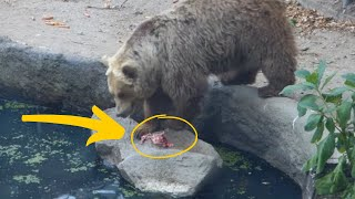 Crowd Holds Its Breath As Bear Grabs A Tiny Creature And Makes A Huge Unexpected Move by Did You Know Animals?