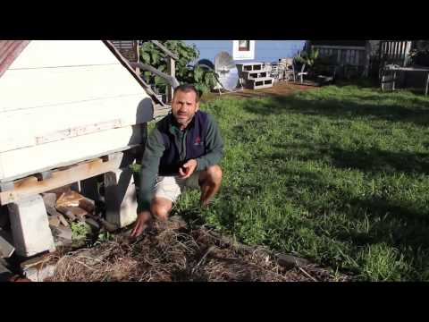 Eco Thrifty Living: Nelson Lebos Super-productive home garden