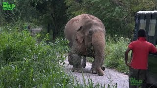 Video A Rescue Mission by a wildlife team: Humanity at its best, showing what humans can do MP3, 3GP, MP4, WEBM, AVI, FLV Oktober 2018