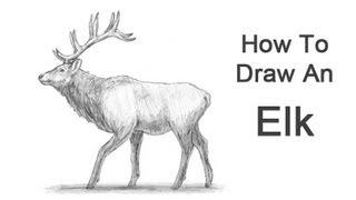 Видео: как нарисовать оленя карандашом