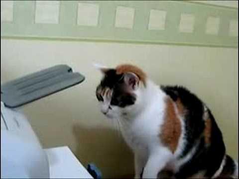 Combat d'un chat contre une imprimante !