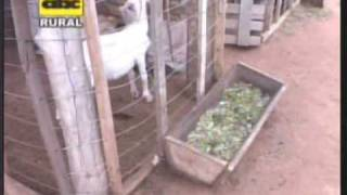 Video Instalaciones rústicas para cría de cabras MP3, 3GP, MP4, WEBM, AVI, FLV November 2017