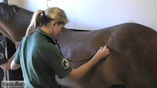 Liphook United Kingdom  City new picture : How to Check a Pulse with Liphook Equine Hospital | HorseandRider UK