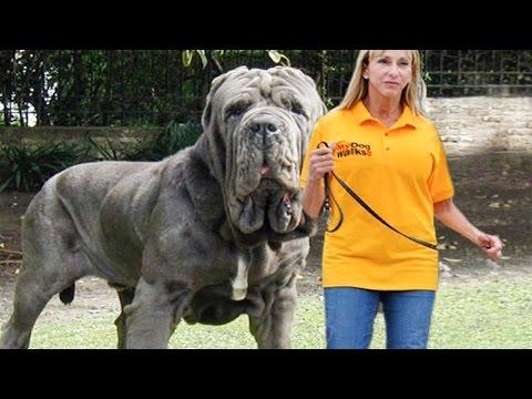 10 самых редких собак