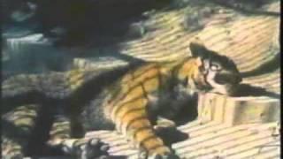 Nonton Animal S Fights Lion Vs Tiger Lion Vs Bear Shepard Dog Vs Poongsan Dog  Film Subtitle Indonesia Streaming Movie Download