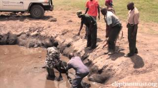 Video Five Days Old Baby Elephant Rescued from Muddy Pond MP3, 3GP, MP4, WEBM, AVI, FLV Agustus 2019