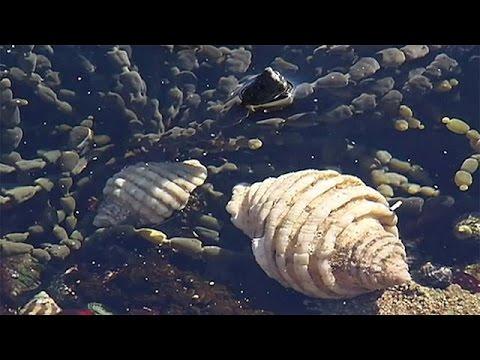 Θαλάσσια σαλιγκάρια εναντίον καρκίνου – science