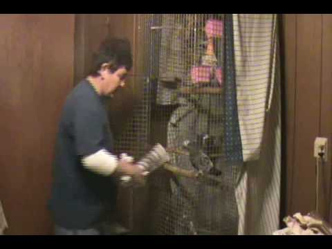 Timneh African Grey – Huge Parrot Cage