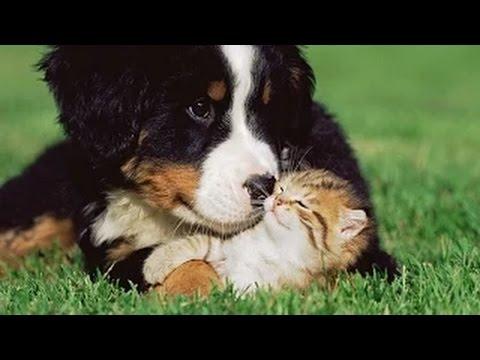 Gatos y Perros jugando