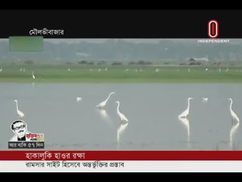 Fish, bird sanctuary Hakaluki Haor in need of conservation (19-01-20) Courtesy: Independent TV