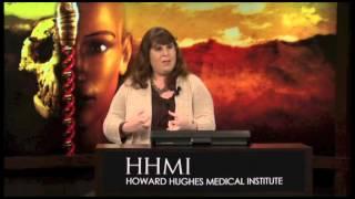 Genetics of Human Origins and Adaptation