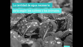 El agua es esencial para producir cualquier cosa que comas o bebas. Cuando desperdicias alimentos, también desperdicias agua. #H2O 💧Subscribe! http://www.youtube.com/subscription_center?add_user=FAOoftheUNFollow #UNFAO on social media!* Facebook - https://www.facebook.com/UNFAO * Google+ - https://plus.google.com/+UNFAO * Instagram - https://instagram.com/unfao/ * LinkedIn - https://www.linkedin.com/company/fao * Twitter - http://www.twitter.com/faoknowledge © FAO: http://www.fao.org