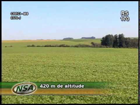 fazenda em Catuipe 297 ha