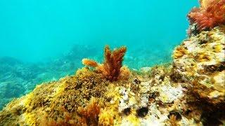 La Herradura Spain  City new picture : Gopro: Snorkeling La Herradura