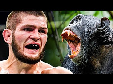 MMA Fighter vs Chimpanzee - Who Would Win?