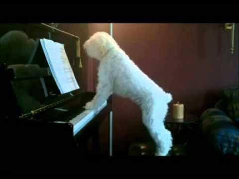 um-cao-apaixonado-por-piano