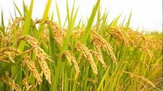 Degung Sunda Video