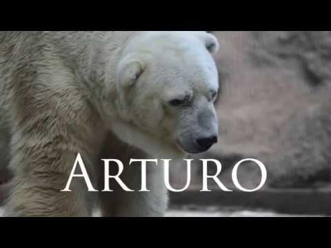 全世界最悲傷,最孤獨的北極熊「終於不用再承受孤獨痛苦」,但是牠解脫的方式卻讓大家都哭了…