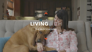 Nonton ALL ABOUT LIVING WITH BLOODHOUNDS Film Subtitle Indonesia Streaming Movie Download