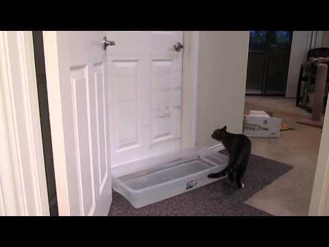 主人在房門前放了一大盆水防貓咪打開門,結果喵星人一招就破解…