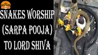 DAIVA SANNIDHI-SNAKES WORSHIP (SARPA POOJA OR PUJA) TO LORD SHIVA AT VARIOUS SHIVA TEMPLES IN INDIA