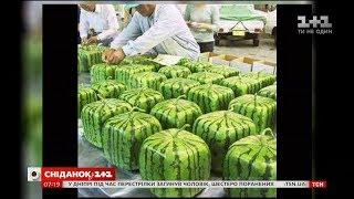 За кордоном вже кілька років поспіль вирощують кавуни різної форми: квадратні, трикутні і навіть з обличчям! Вирощують їх у контейнерах з органічного скла. Сніданок з 1+1 у мережі Facebook https://www.facebook.com/snidanok