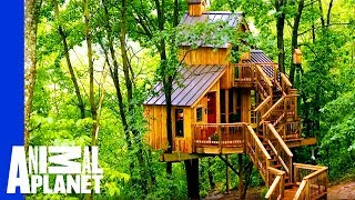 Building a Treehouse Inspired By a Bird House by Animal Planet