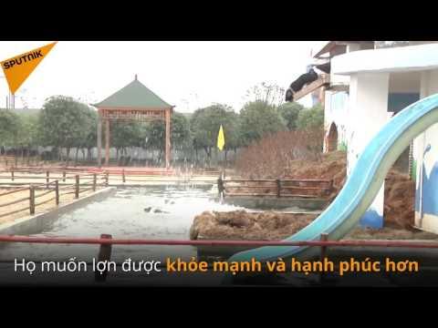 Một trại chăn nuôi ở Trung Quốc