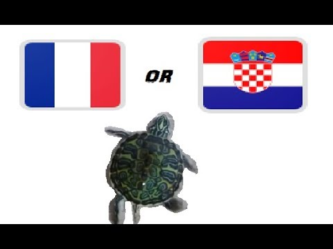 World cup final.The Guessing Turtle. France vs Croatia . World Cup Russia 2018