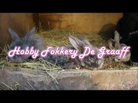 Konijnen Fokkerij De Graaff – Eerste Nest 2011