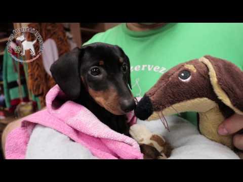 Karácsonyra állatSTOP-ot kérnek az állatvédők