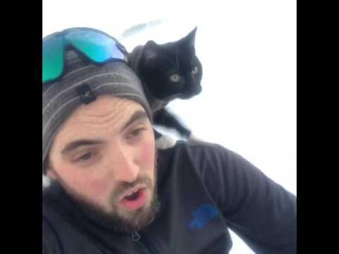 Sledding with my cat. (видео)