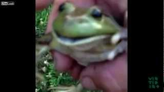 Funny Screaming Frog Compilation - YouTube