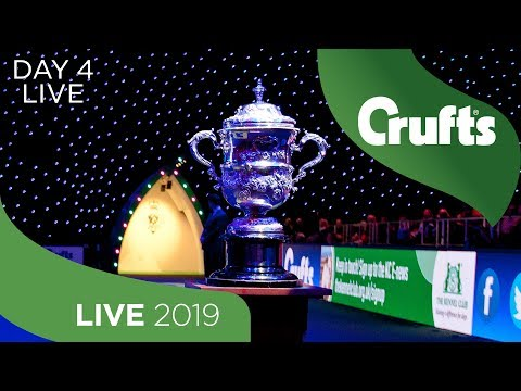 Day 4 LIVE  Crufts 2019