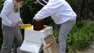 Download Lagu Bee Nuk installation Mp3