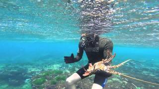 Lord Howe Island Australia  city images : Lobster Diving at Lord Howe Island