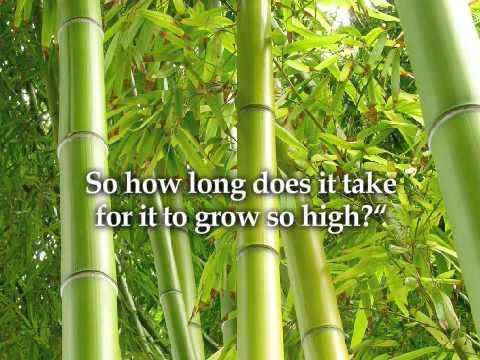 Chinese Bamboo Heaven Awaits