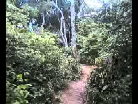 Trilha em mamanguape-pb