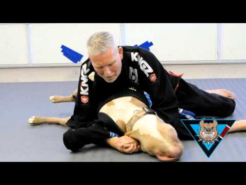 Blue Belt Grapples with Pitbull Training Partners FUNNY!