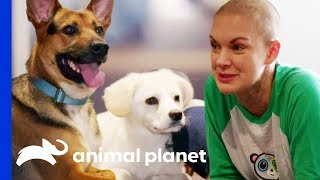 Amanda Saves 16 Dogs During Road Trip Across Ten States | Amanda To The Rescue by Animal Planet