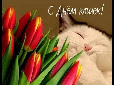 Сегодня отмечаем всемирный день КОШЕК!!!